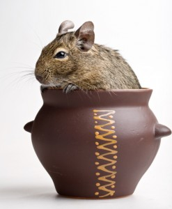 mouse in pot
